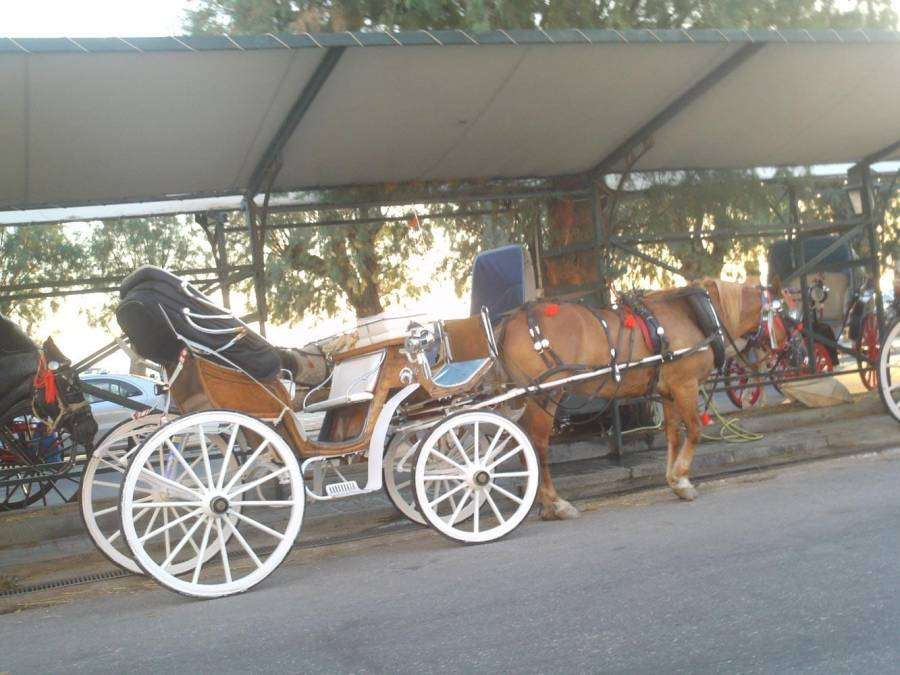Horse carriages - Argo Saronic islands turistic guide